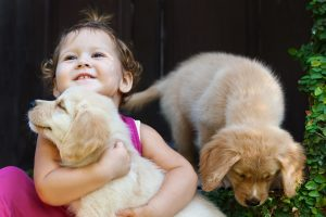 dogs and a baby
