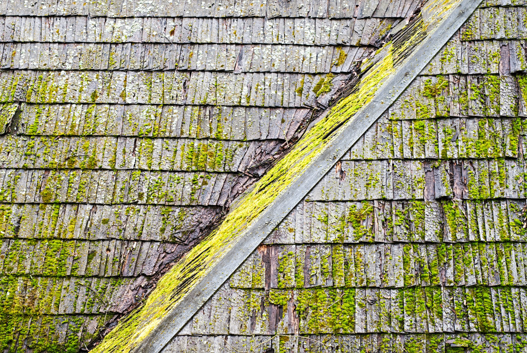 roof with lichen
